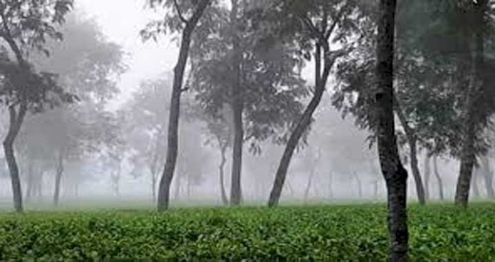 শ্রীমঙ্গলে সর্বনিম্ন তাপমাত্রা রেকর্ড: ৭ দশমিক ৫ ডিগ্রি সেলসিয়াস